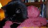 carynb: (Knitting)