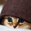 hellkitty: (cat kitten peeping)