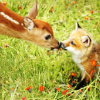 toeknuckles: (fox and deer)