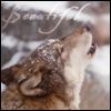 heliona: (beautiful wolf)