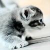 sally_maria: (Cute Cat)