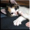 sqlrob: (calypso kitty)
