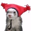 piratesmile331: (ferret with hat)