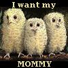 tabular_rasa: (Owl Mommy)