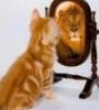 pclu2004: (lion)
