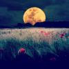 narkyze: (moon)