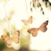 narkyze: (butterflies)