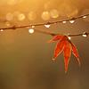 nonniemous: (Autumn rain)