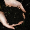 ilyena_sylph: my hands, in my side garden-bed (Photos: hands in the earth)