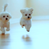 limit_the_sky: (fluffy puppies) (Default)