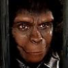 chimpanzee: (benevolent, human expert)