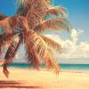 carolinecrane: (misc: beach)