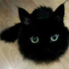 ysobel: A black floof with cat eyes (floof of doom)