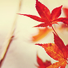 barefootsong: Red autumn leaves on an off-white background. (autumn leaves)