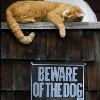 "carrieann: cat and ""beware of dog"" sign (beware of the cat)"