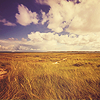barefootsong: prairie under a blue sky with clouds (seas of gold)