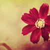 barefootsong: pink flower (pink flower)