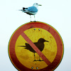 sloth: real bird perched on a no birds allowed sign ((ex)bird)