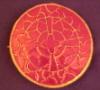cathyr19355: Medieval brooch (pic#633399)