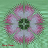 lferion: Art of pink gillyflower on green background (0)