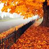 jaxadorawho: (Seasonal ☆ Autumn ~ fenced tree)