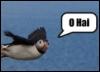 coneycat: (puffin_hai)