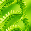 forest_choir: (ferns)