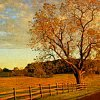 neverspent: art of field, fence and tree (farm fence)