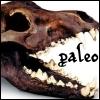 paleo: Dire Wolf skull (Default)