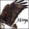 meirya: (hawk, meirya, rough-legged hawk, therian)