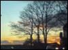paraxeni: (tree sky)