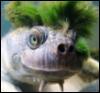 paraxeni: (turtle)