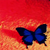 littlemoose: A photograph of a vivd blue swallowtail butterfly against an orange stucco wall (Butterfly: blue on red) (Default)