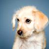 shfan: <lj user=bases_by_maggie> (Puppy Dog)