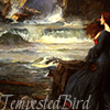 tempested_bird: (Tempest)
