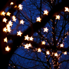 lishiewishes: Starry fairylights strung amongst tree branches (KS: Her Determination)