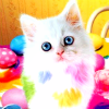 fairwells: rainbow kitty ([stock] rainbow kitty)