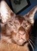 purejuice: (cuba cat)