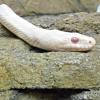 everfixedmark: (snake 1)