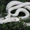 everfixedmark: (snake 2)