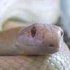 everfixedmark: (snake 3)