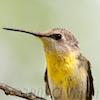orange_sun: ([hummingbird] inquisitive)