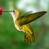 orange_sun: ([hummingbird] in flight)