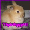 "acelightning: adorable little bunny blowing a ""razzberry"" (bunnyrazz)"