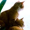 petographs: Cat with paw over his brother's shoulders (Cat hug)