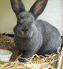 hyperbole: A blue rabbit. (Bunny)