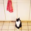 wendelah1: Elmer sitting in the kitchen (Elmer Kitty)