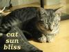 owlmoose: (cats - tori sun)