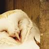 orm: HAPPY OWL (YAY: owl)