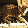 derek_hale: (misc; kitten on piano)